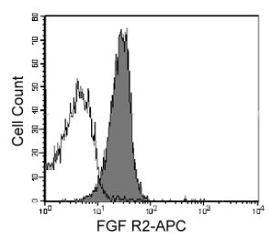 Human U937 monocytic cells were stained with APC-conjugated anti-human FGF R2 (filled histogram) or isotype control (open histogram).