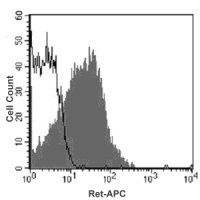 Intracellular staining of SH-SY5Y cells with APC-conjugated anti-human Ret (filled histogram) or with isotype control antibody (open histogram).